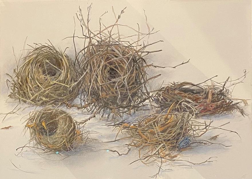 Five nests – habitat 102
