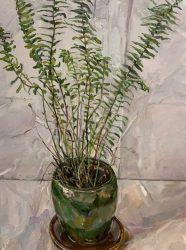 Small fern in green vase II